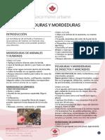 16__Picaduras_y_mordeduras