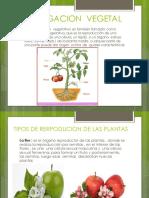 REPRODUCCION OPROPAGACION EN PLANTAS.pptx