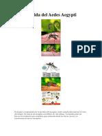 Ciclo de Vida Del Aedes