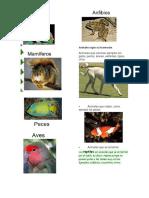 Animales y Su Clasificación