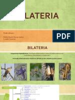 BILATERIA