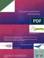 Celulas Eucariotas y Procariotas
