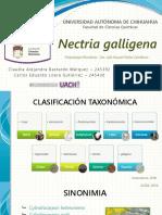 Nectria galligena - fitopatología