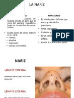 NARIZ_ALEX.pptx