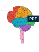 Mapa do Cerebro