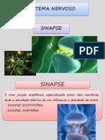 SISTEMANERVOSOPARTE2sinapse.pdf