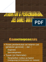 2spermatogenesis.ppt