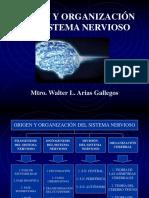 SISTEMA NERVIOSO POR Mtro. Walter L. Arias Gallegos