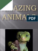 Amazing Animals of the World