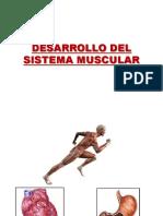 2. Desarrollo Del Sistema Muscular