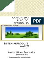 anatomi reproduksi