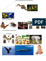 Clases de Animales Por Su Estructura Osea