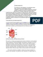 Estructura Del Sistema Digestivo