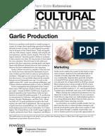 Garlic Production