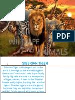 wildlife_animals.pptx