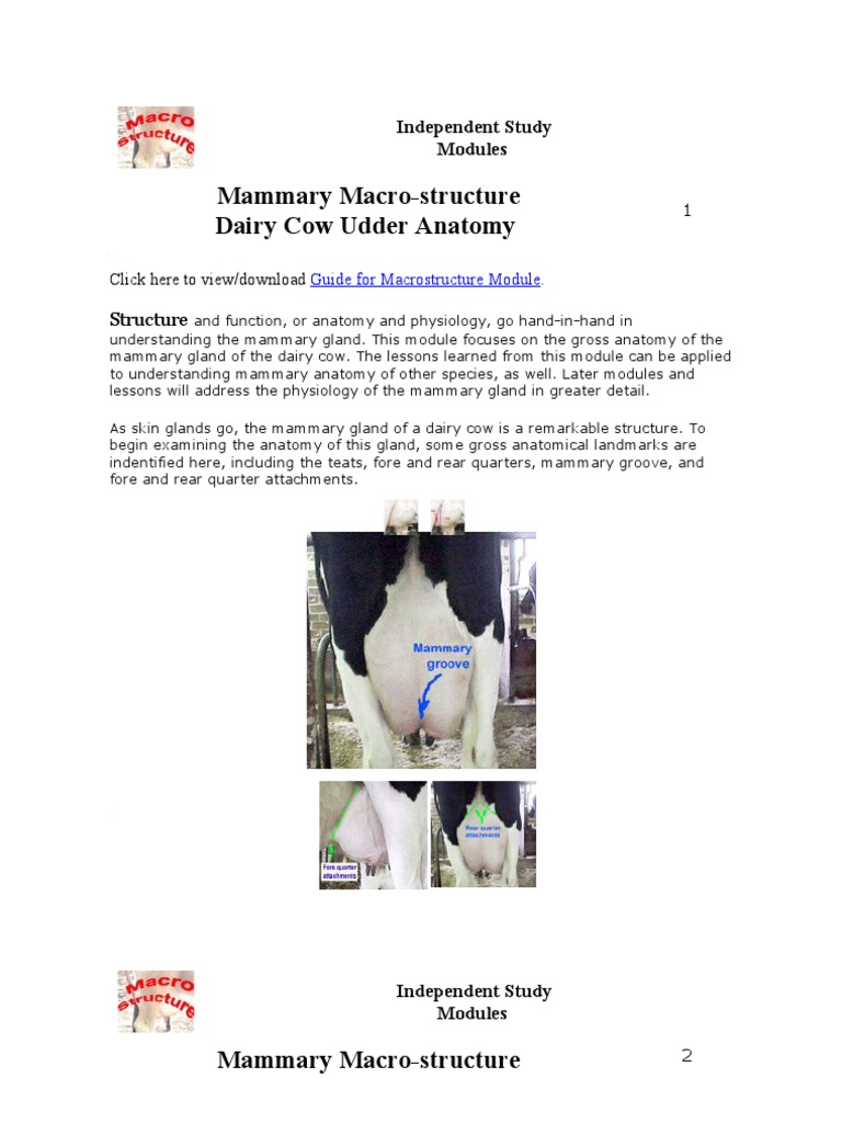 Magnificent Dairy Cow Anatomy Component - Human Anatomy Images ...