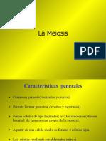 3.3 Meiosis (3)