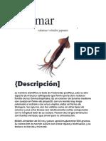 Anatomía Del Calamar (Autoguardado)