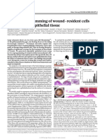 In Vivo Reprogramming of Wound-resident Cells Generates Skin Epithelial Tissue