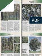 Plantas - Arboles de Hoja Caduca1Parte7