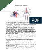 El Corazón Sistema Circulatorio