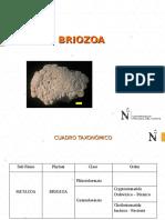 Briozoa