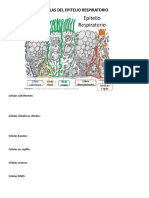 Celulas Del Epitelio Respiratorio