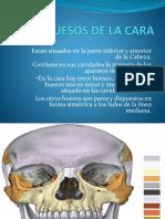 Huesos de La Cara Morfo0