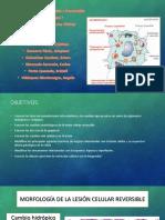 Seminario 1 - Lesión celular.pptx
