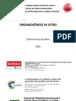 Seminário - Organogênese in Vitro