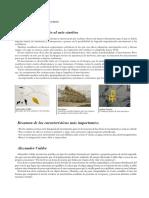arte-optico-y-cinetico.pdf