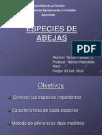 especies_de_abejas.ppt