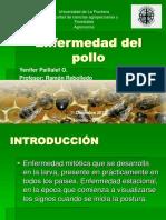 Enfermedad Del Pollo en abejas