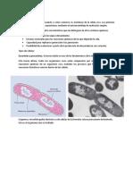 Tipos de células.docx