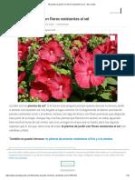 16 Plantas de Jardín Con Flores Resistentes Al Sol - Lista y Fotos
