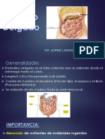 11.Intestino Delgado (1)