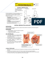 ANATOMIA - CAP (11).pdf