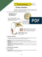 ANATOMIA - CAP (6).pdf