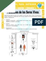 Ficha-Funciones-de-los-Seres-Vivos-para-Sexto-de-Primaria.doc