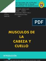 Musculo Cabeza