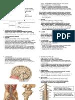 Aula 1 - Introdução à neuroanatomia.docx