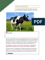 7 Razas de Vacas de Leche