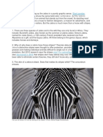zebra.docx