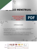 Ginecología - Ciclo Menstrual