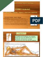 T3-Huesos-musculos(1).pdf