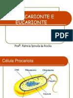 2. ESTRUTURA CELULAR.pdf
