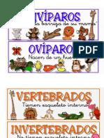ANIMALES vertebrados.docx