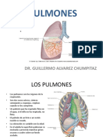 (22) Pulmones.ppt