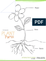 Plant description