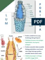 Sth Porifera